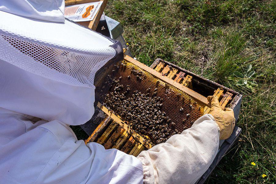 Journée apicole à Saint-Barnabé