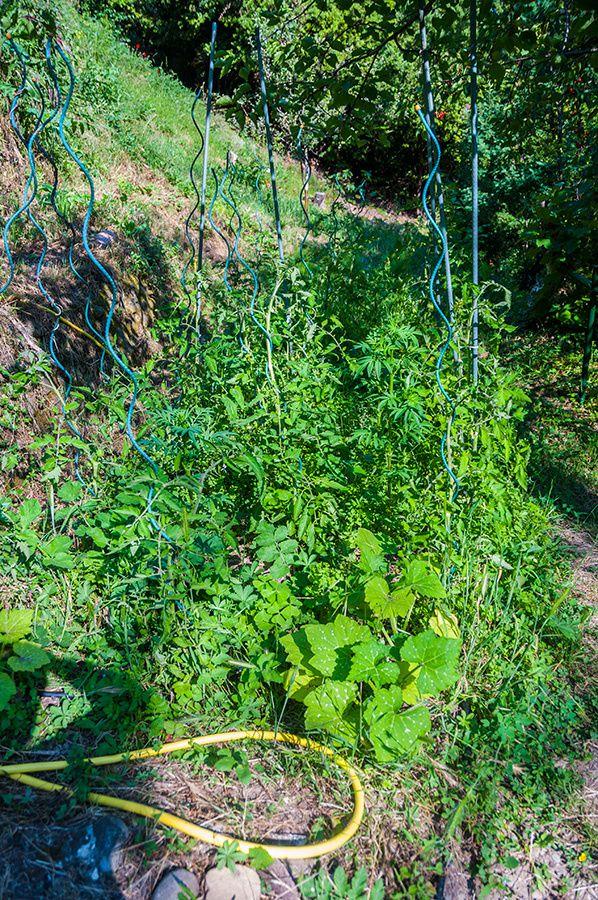 Un petit tour du jardin en ce début du mois de juin