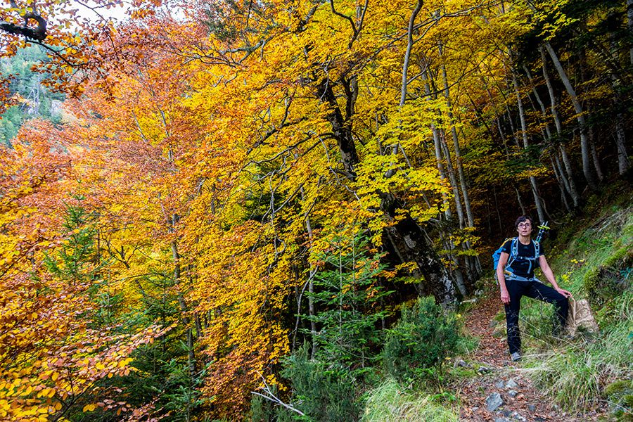 Randonnée dans la forêt de la Maïris à l'automne