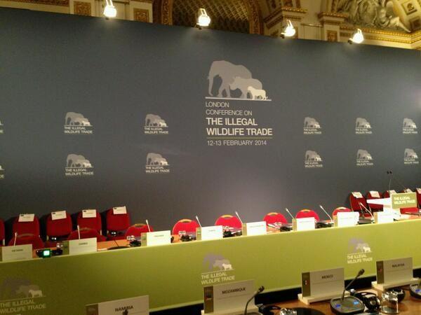 Ali Bongo Ondimba réclame un moratoire de 10 ans sur le commerce de l'ivoire