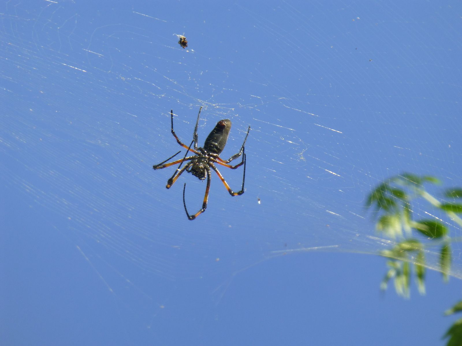 Les araignées du Premier
