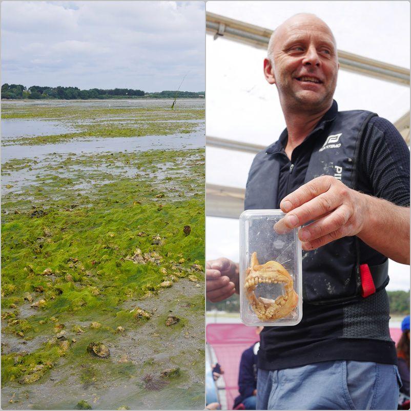 Le champ d'huîtres et la dorade royale