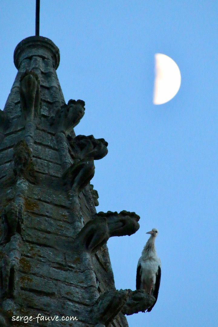 Ce soir 3 avril, Miss Cigogne sur le clocher de Marboué