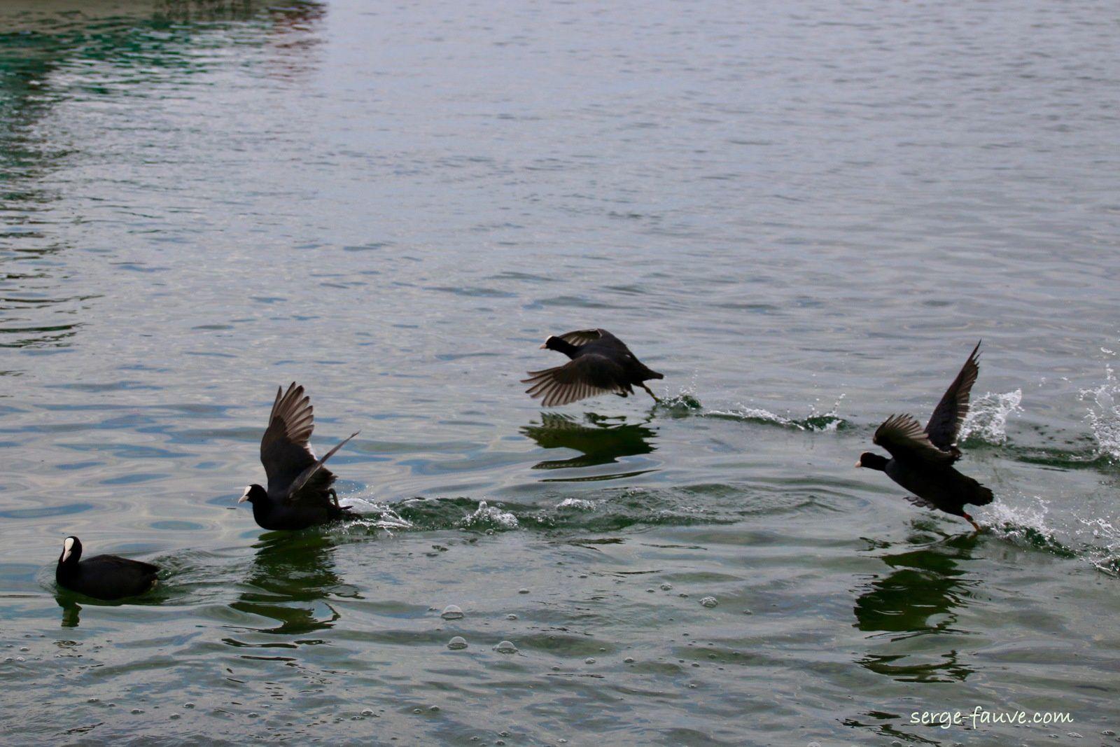 Promenade autour du lac de Constance, Album