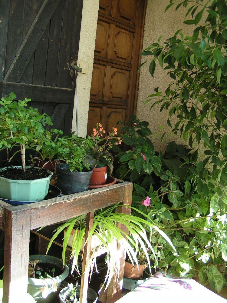 plante veranda beautiful cactes en vranda with plante veranda free plante veranda with plante. Black Bedroom Furniture Sets. Home Design Ideas