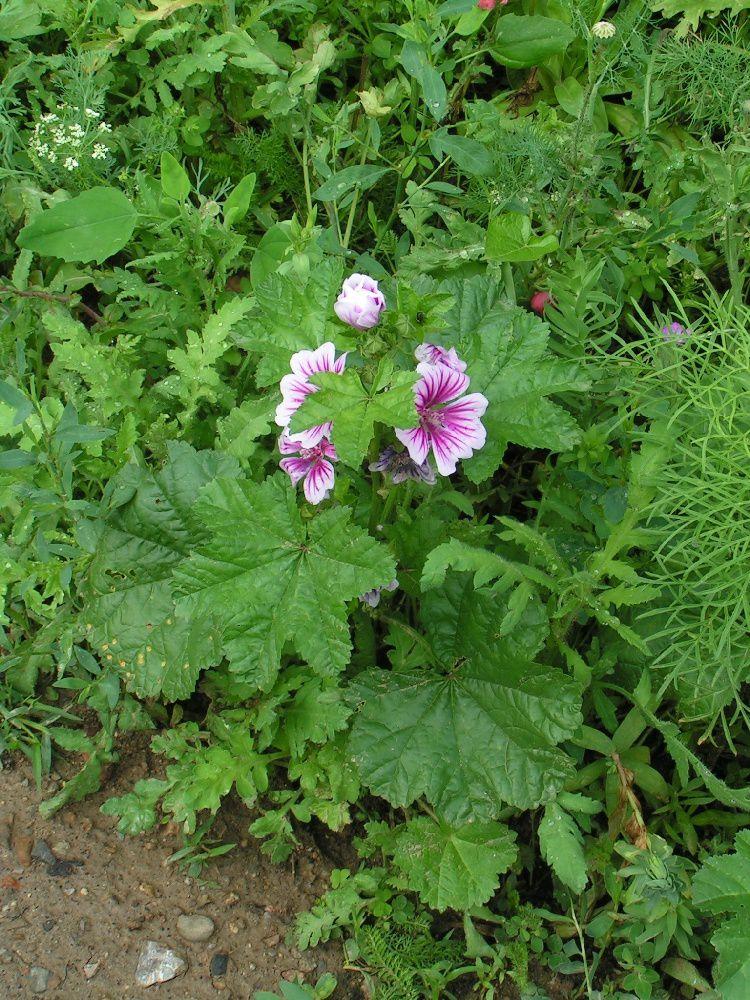 La jach re de mon jardin 2 le blog de for Jardin 66
