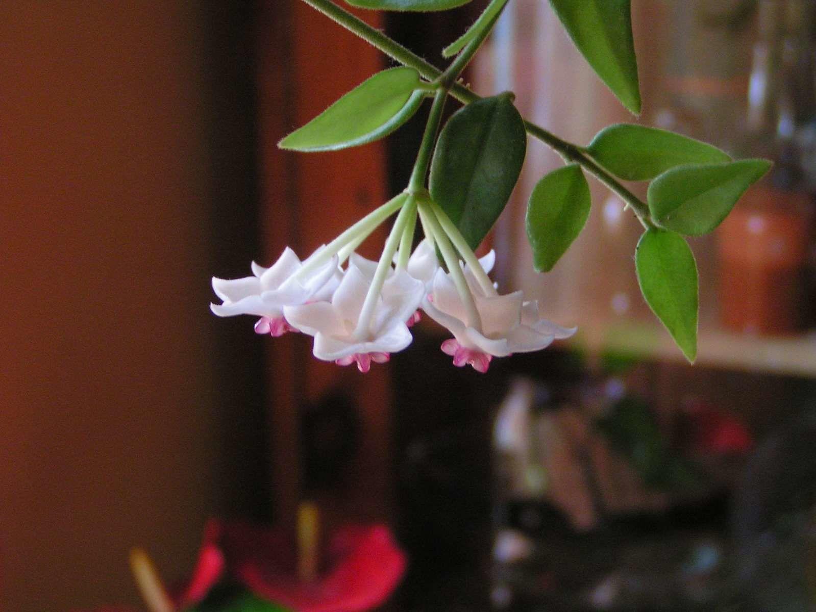 La &quot&#x3B;Fleurs de porcelaine&quot&#x3B; ......