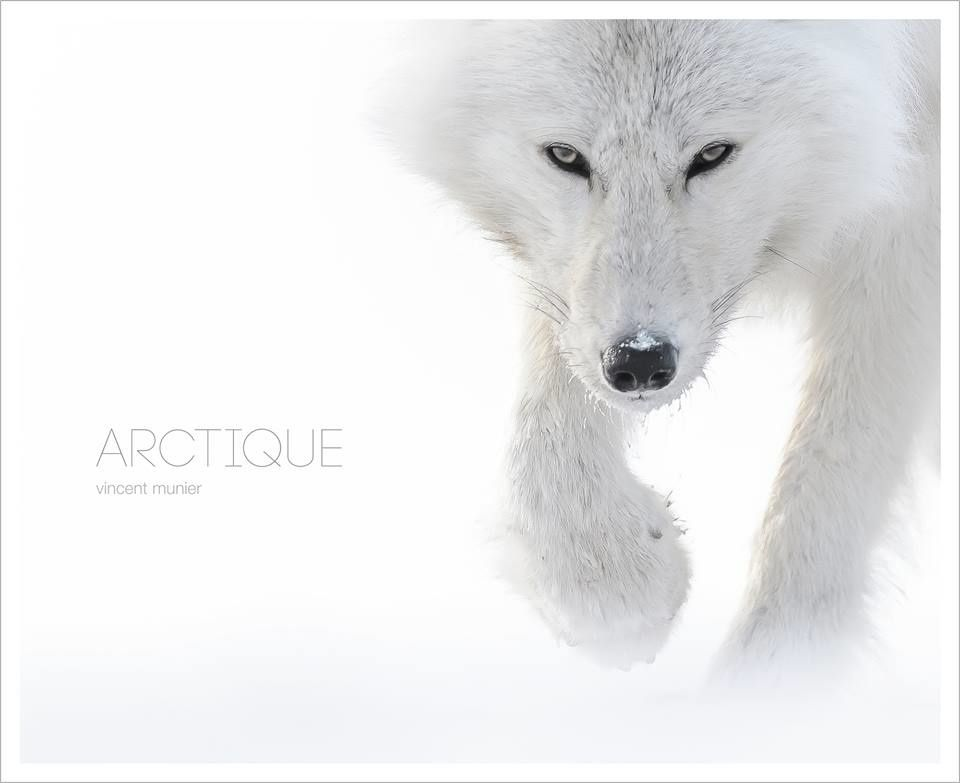 Arctique : la sortie du livre de Vincent Meunier attendue au mois d'Octobre