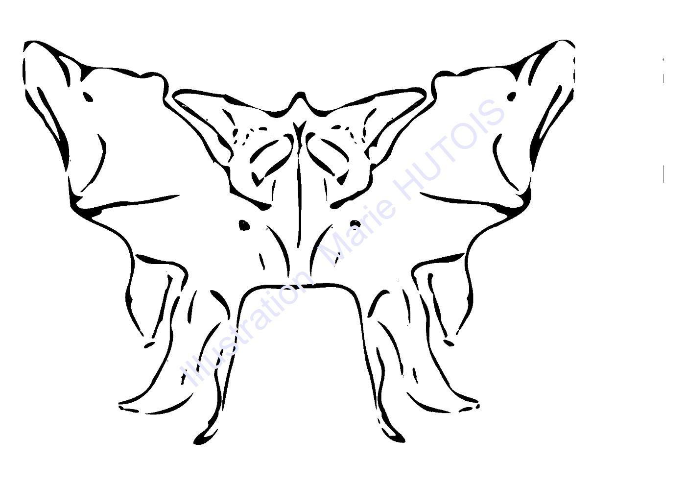 Le sphénoïde