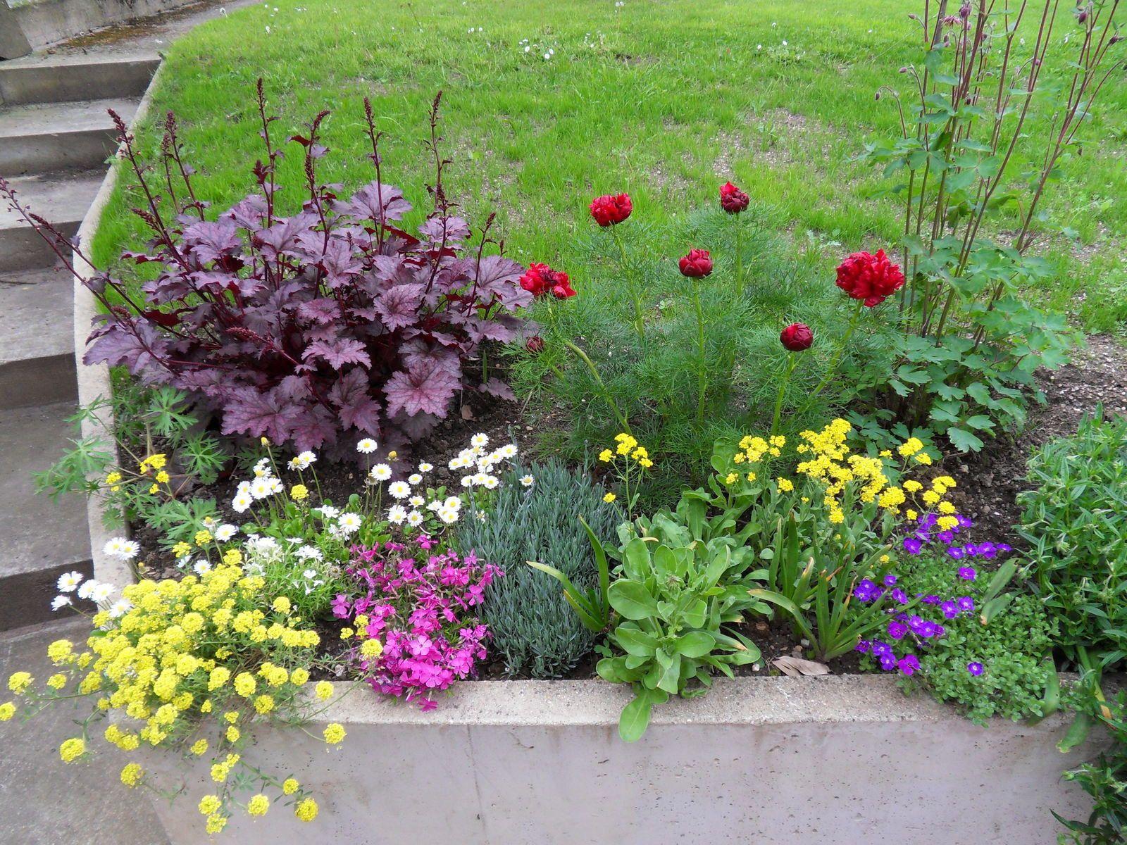 Quelques fleurs de mon jardin....