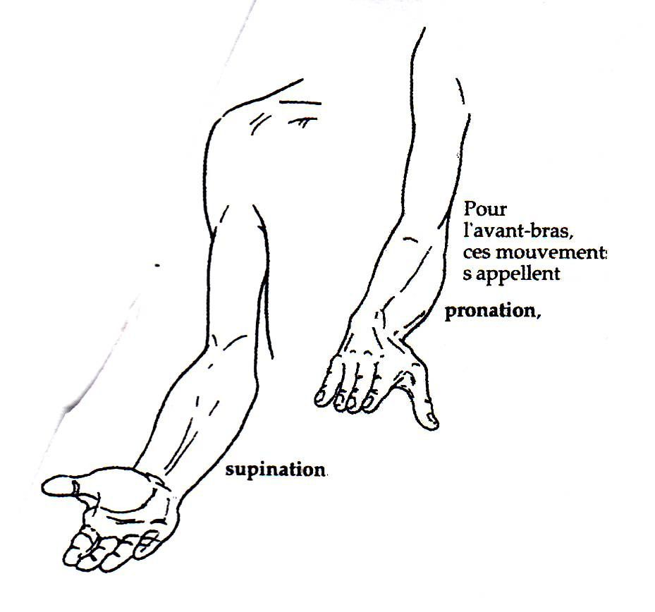 Exelent Supination And Pronation Pattern - Physiology Of Human Body ...