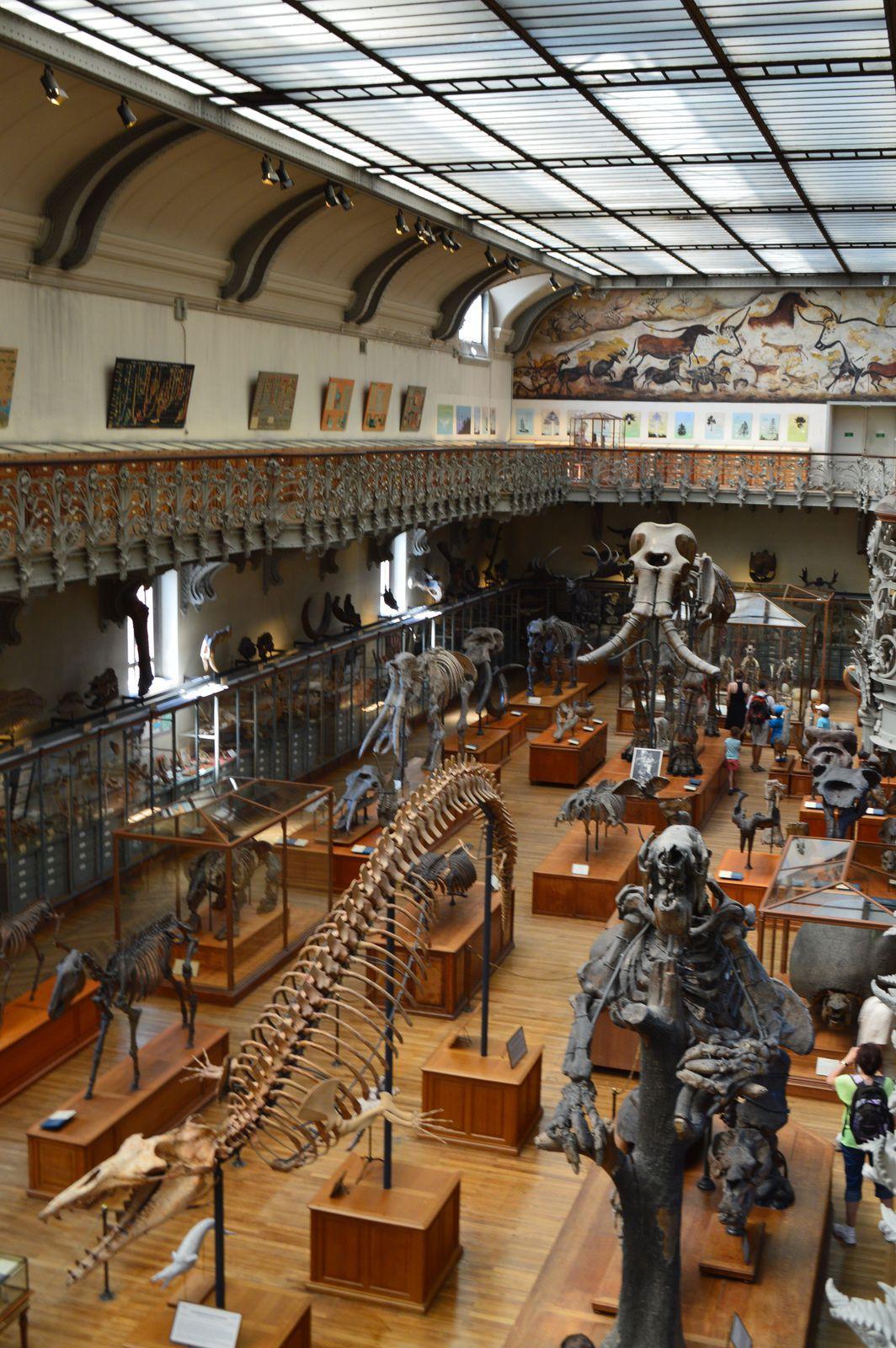 muséum d'histoire naturelle, galerie de paléonthologie (5ème arrondissement)