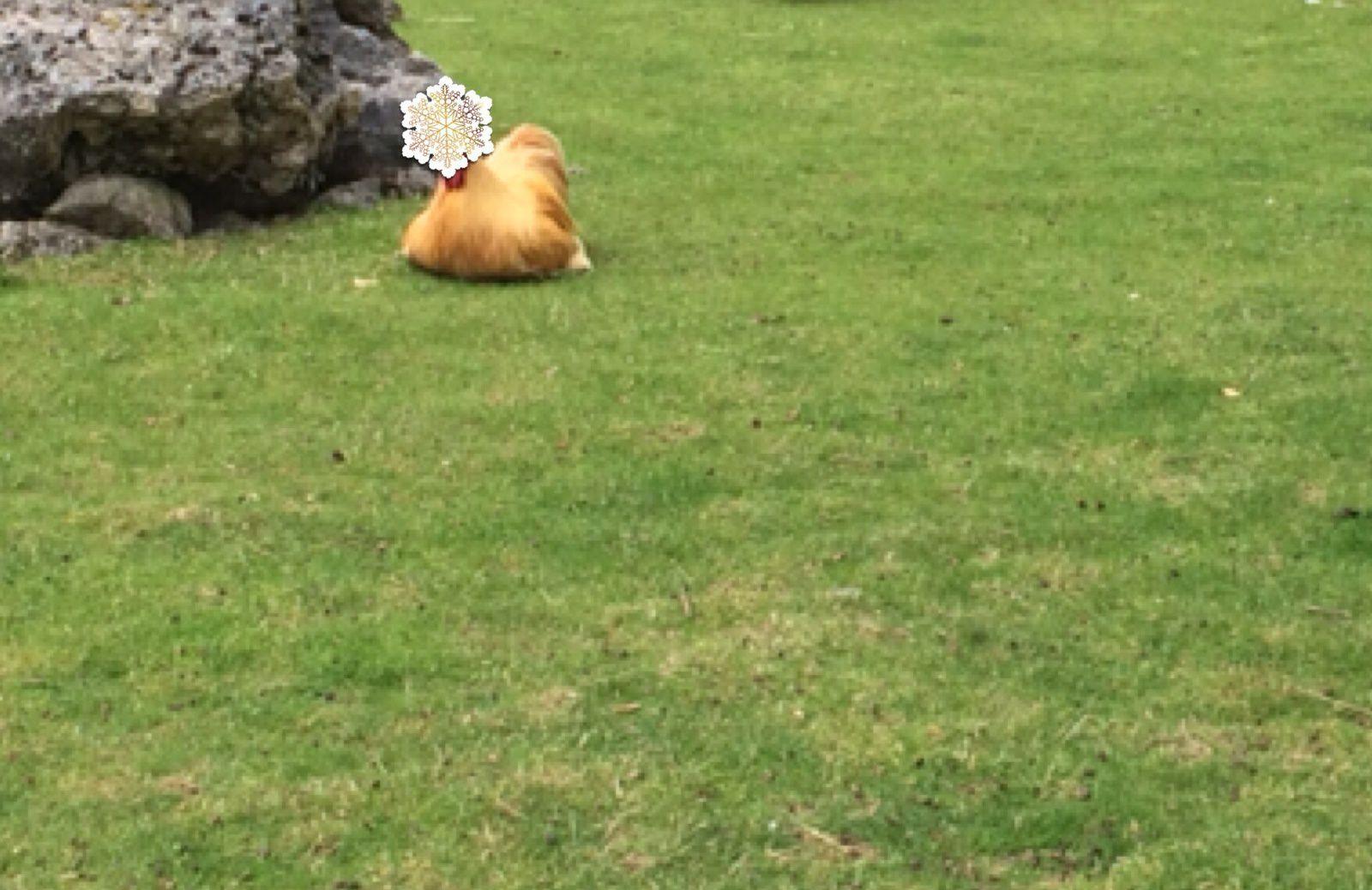 J'ai jamais vu des poules aussi grosses. Je sais pas ce qu'elles mangent mais elles mangent ça c'est sur
