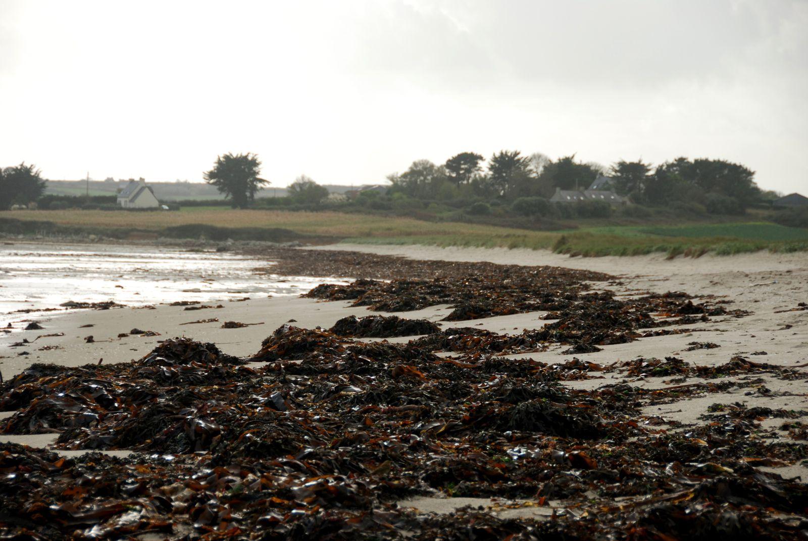 Aigrettes, sternes, mouettes rieuses, sanderlings et bernaches