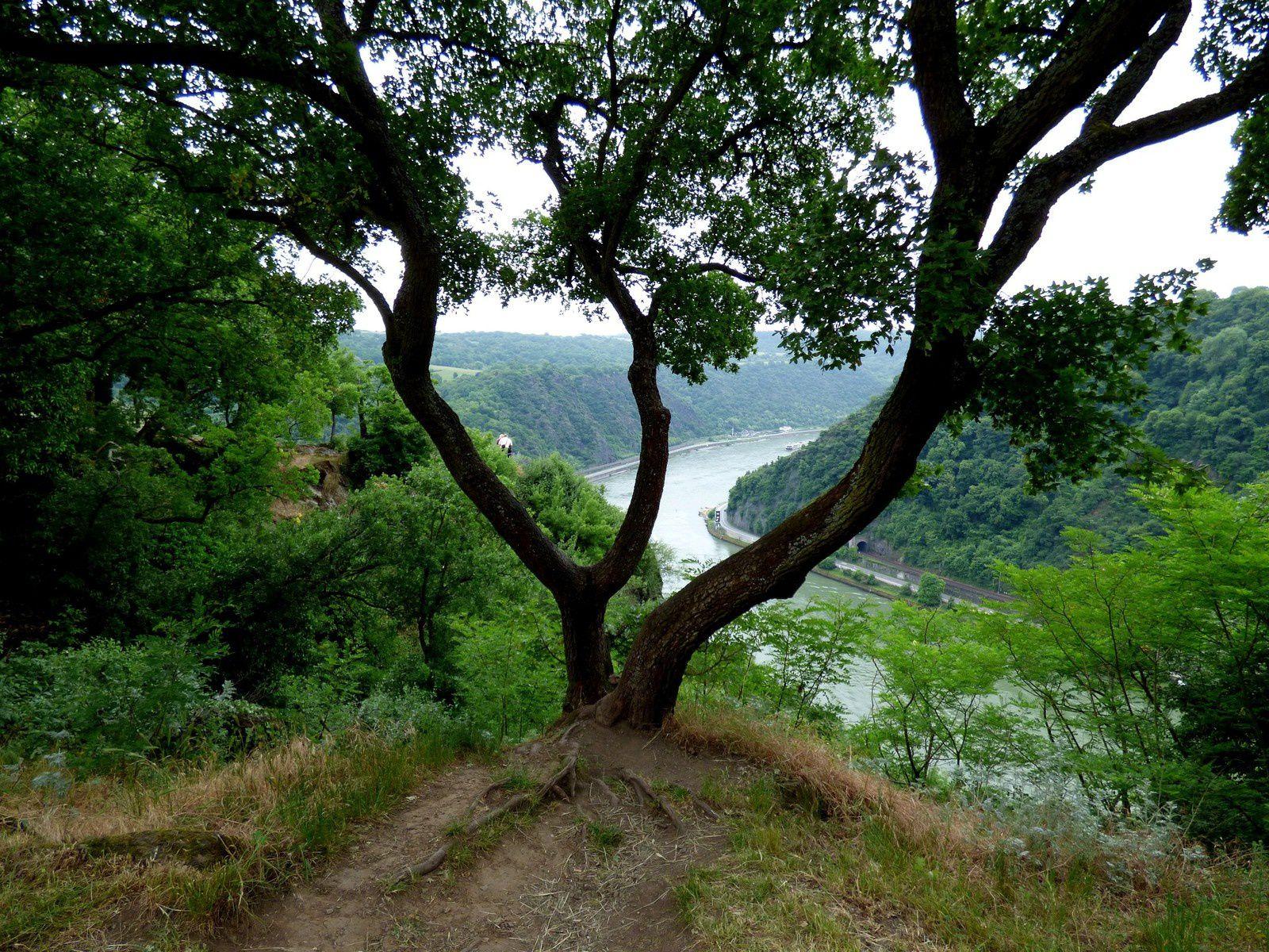 La vallée du Rhin romantique et ses châteaux
