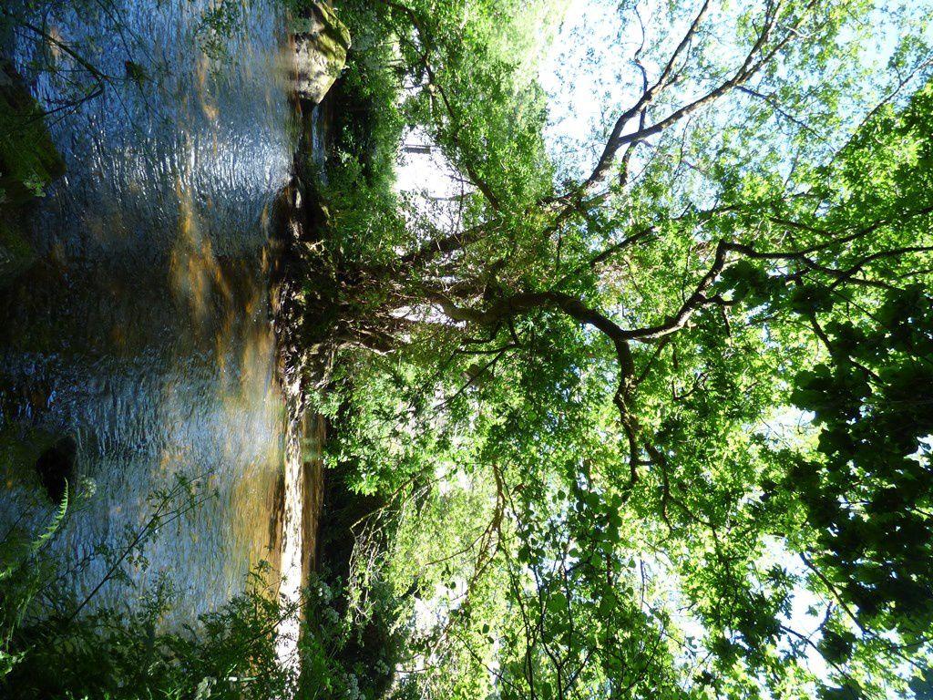 Au bois de l'amour, bergeronnettes des ruisseaux tu trouveras