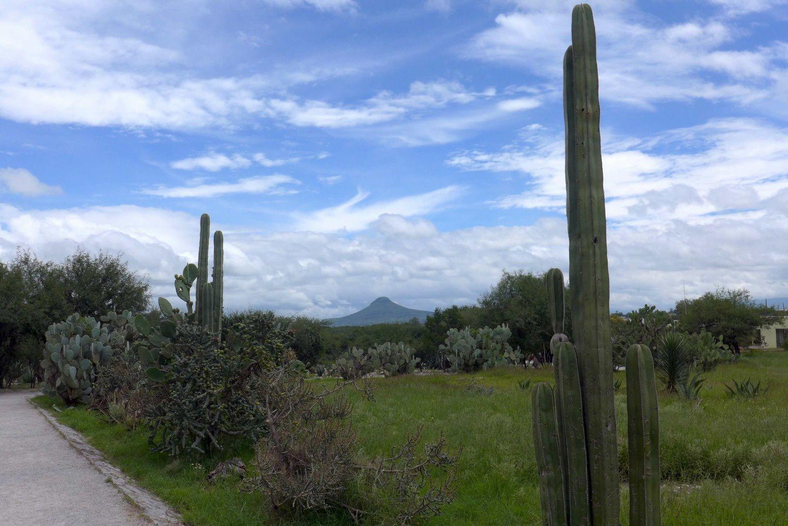 Tula petite balade dans les cactus