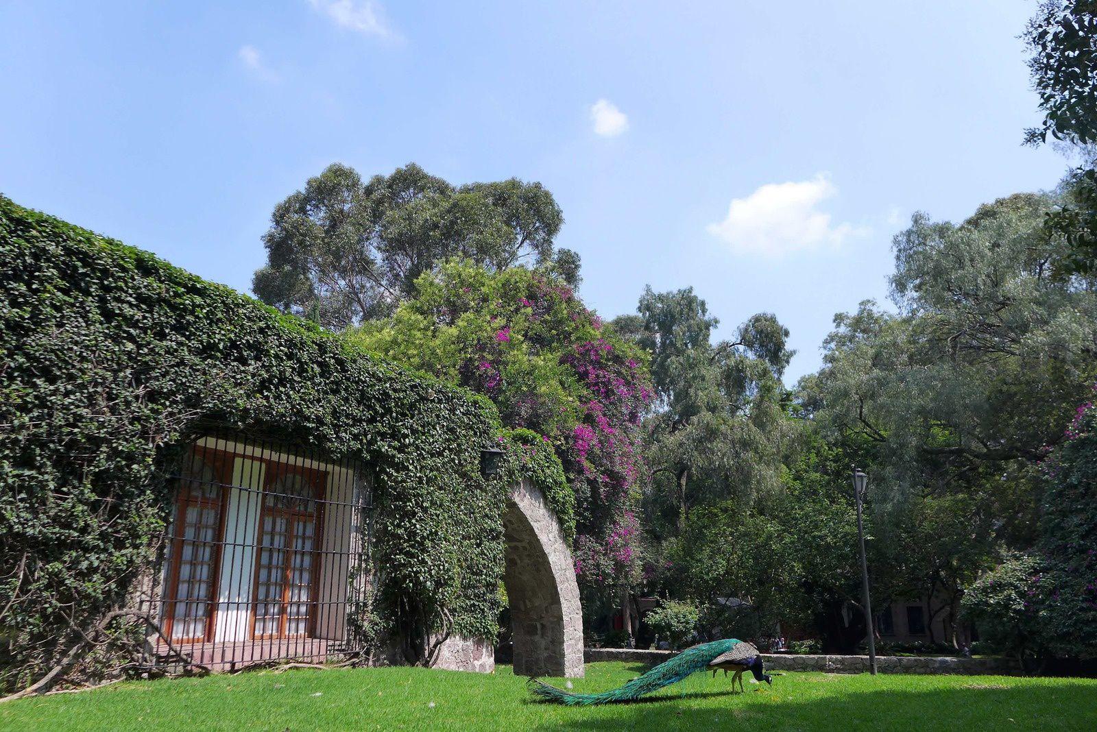 Museo Dolores Olmedo: Installé dans une paisible hacienda du XVIIe siècle, ce musée possède sans doute la plus importante collection d'œuvres de Diego Rivera. Femme du monde, Dolores Olmedo, qui résida en ces lieux jusqu'à sa mort en 2002, fut le mécène de Diego Rivera. Les 144 pièces qui composent sa collection huiles, aquarelles et lithographies de diverses périodes sont présentées au milieu de figurines précolom-biennes et d'objets d'artisanat. Une salle est également consacrée aux peintures de Frida Kahlo. Dans les vastes jardins de la propriété, flânent des paons et courent gaillardement des xoloitzcuintles, race de chiens précolombiens sans poils.