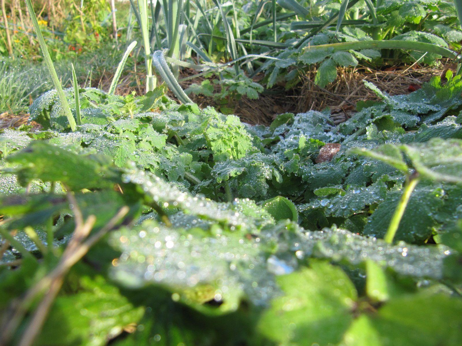 Le jardin d'AIMA prêt pour les fêtes...