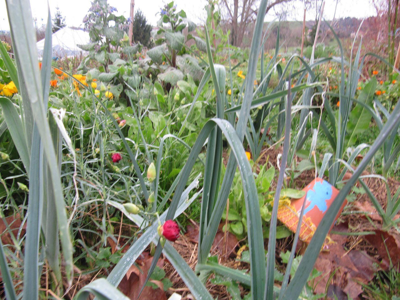 Avec aima le compostage a ses adeptes le blog de aima - Que faire avec du marc de cafe dans le jardin ...