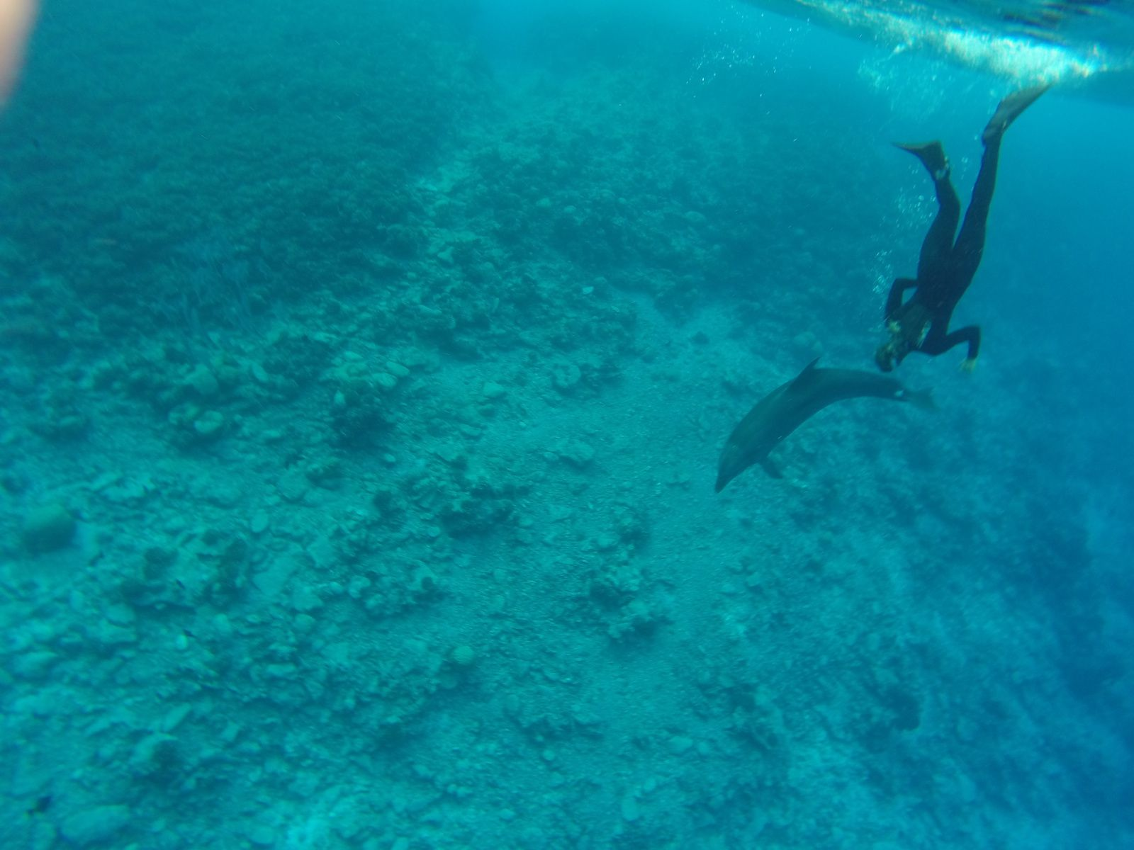 Rencontre avec les dauphins belgique