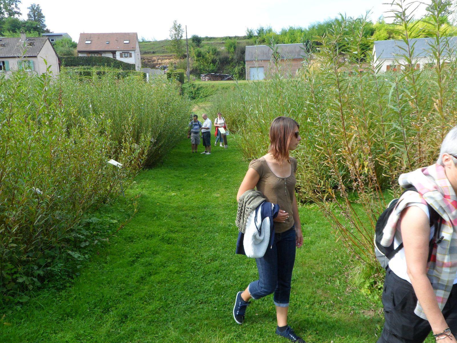 Au cours de notre promenade instructive, on croise toutes sortes d'osiers.