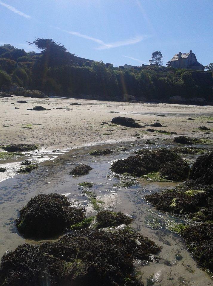 à marée basse, les contours changent, apparaissent les rochers , les algues, et cette faune sous -marine .......