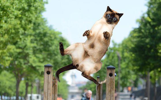 Des aires de fitness pour les chats...