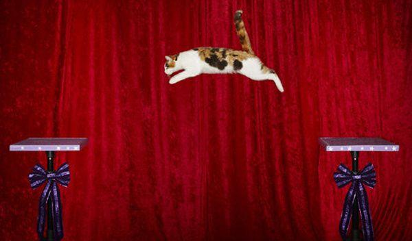 Alley - Le plus long saut réalisé par un chat