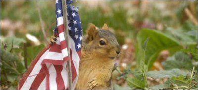 Un patriote à quatre pattes aux USA !
