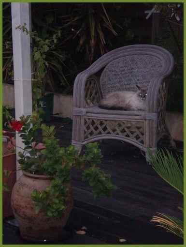pendant ce temps, mon chat Fripouille, s'endort paisiblement !!