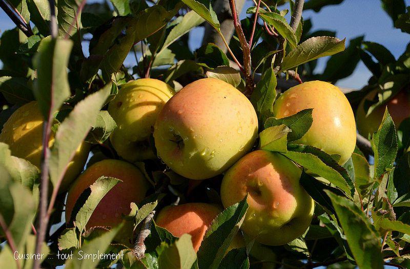 Minis Bruschettas  Jambon Sec - Chèvre - Pomme