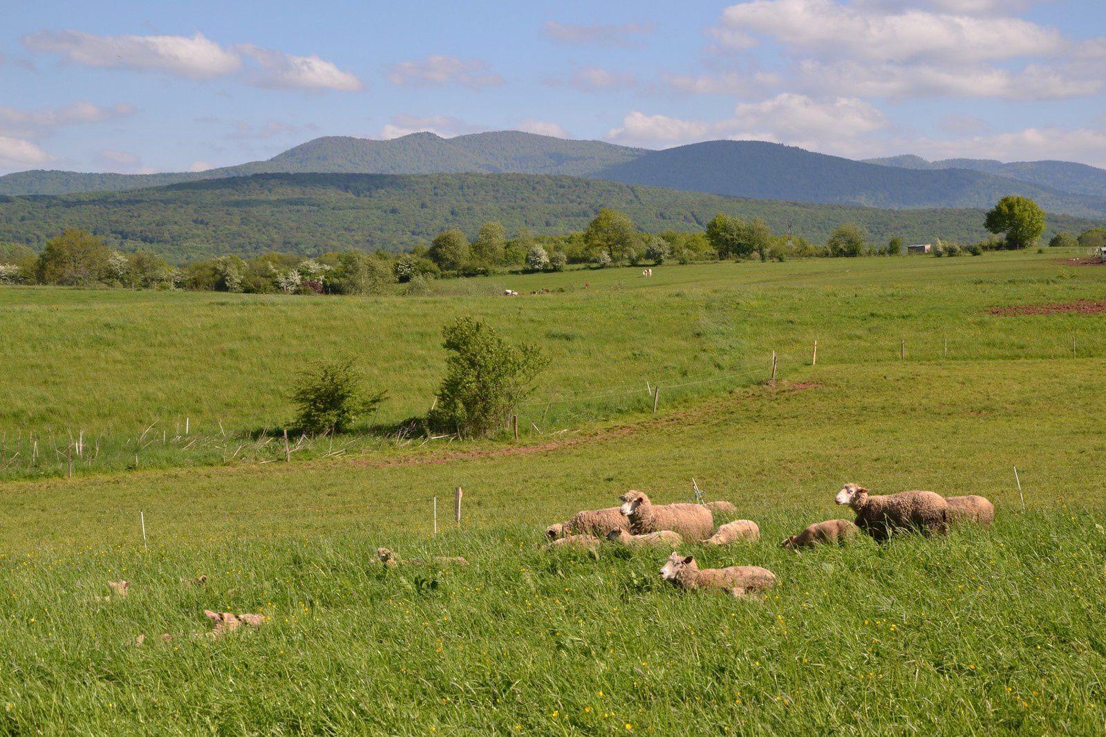 Le paysage entre Frahier et Evette