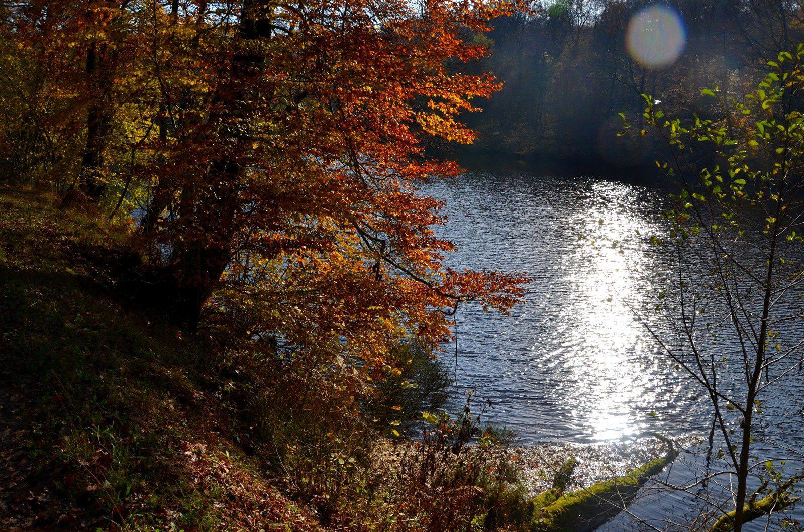Chenebier - un air de Mille étangs
