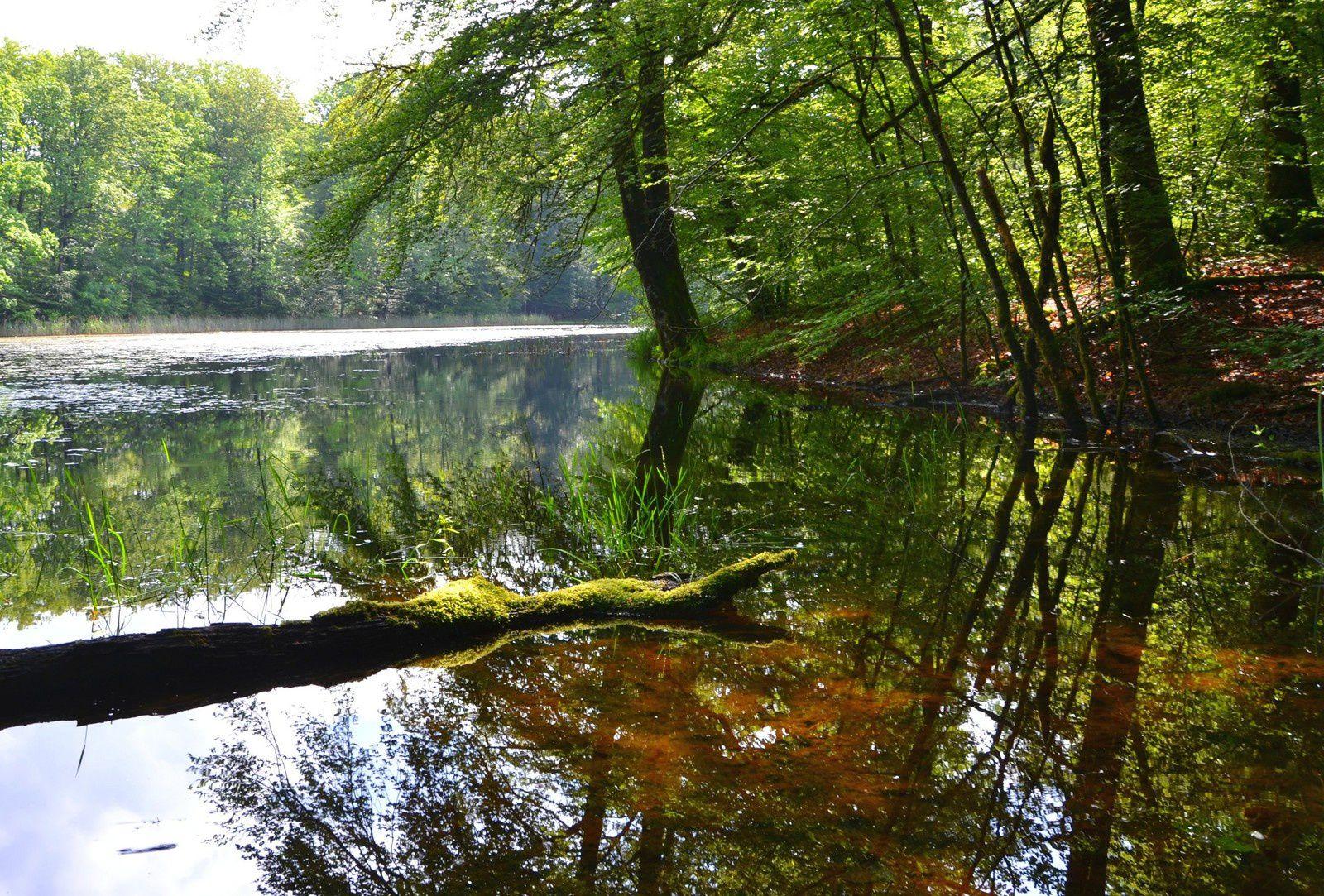 Ecromagny - succession d'étangs