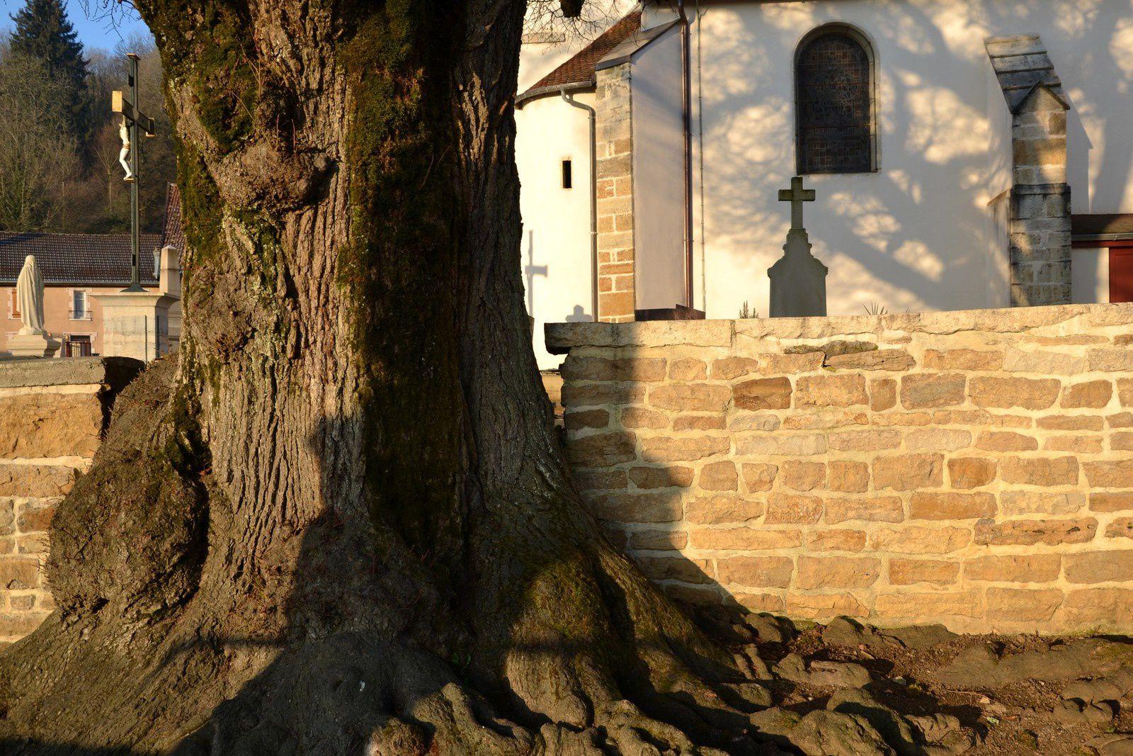 Cerre-lès-Noroy    -   Haute-Saône