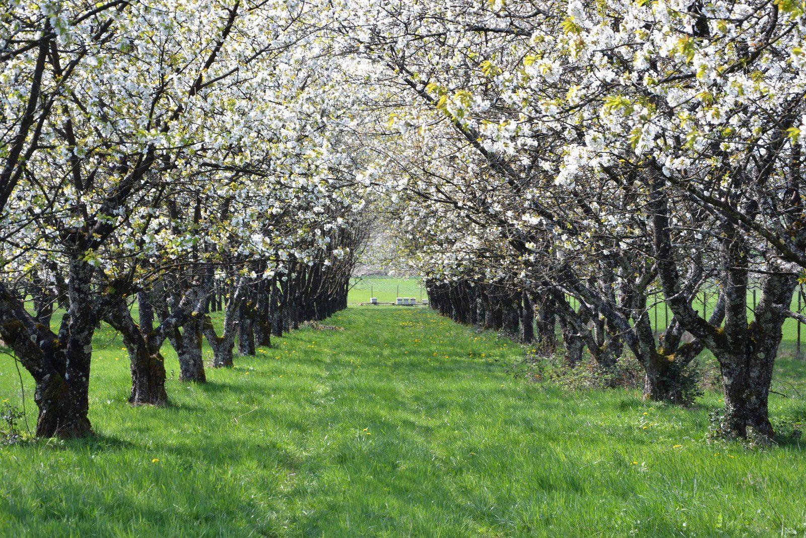 Fougerolles : floraison