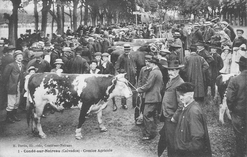 (Article) L'histoire des comices agricoles en France (XIXe-XXe siècles)