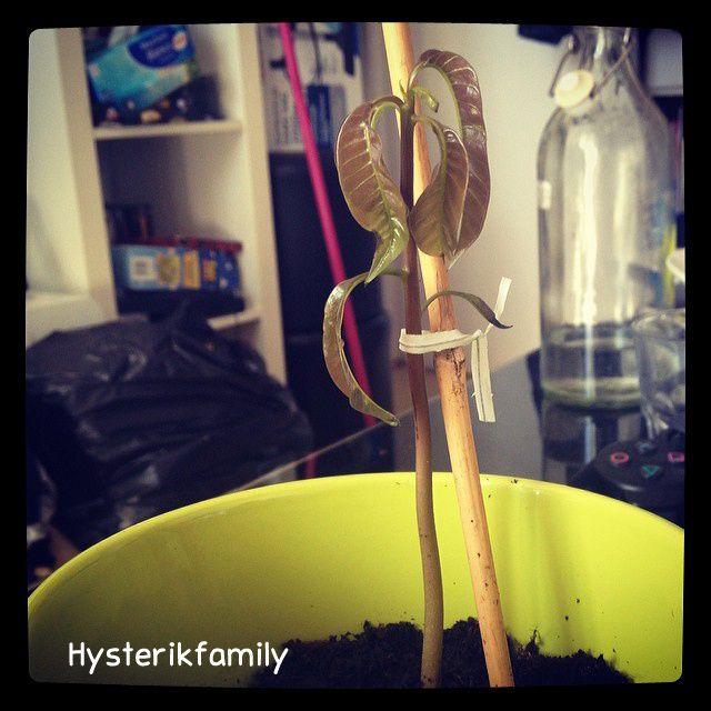 Comment nous sommes devenus accro au jardinage (DIY dedans)