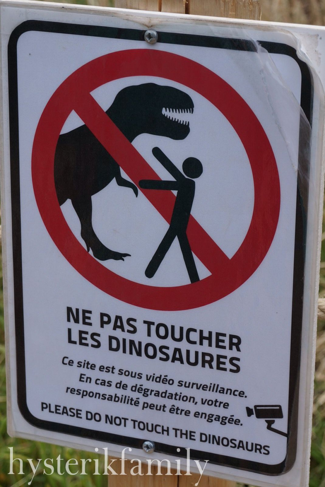 Attention, on entre dans un espace dangereux, on ne nourtit pas les dionosaures !!