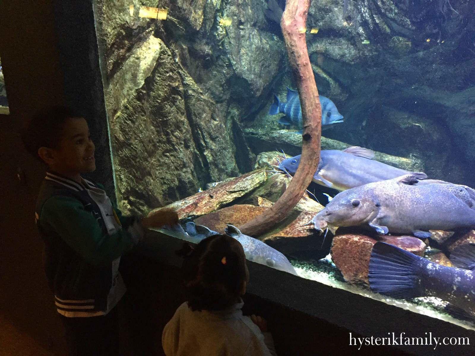 L'aquarium tropical de Porte Dorée - Sortie en famille à Paris