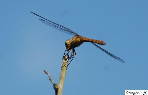 Insectes et minidrones