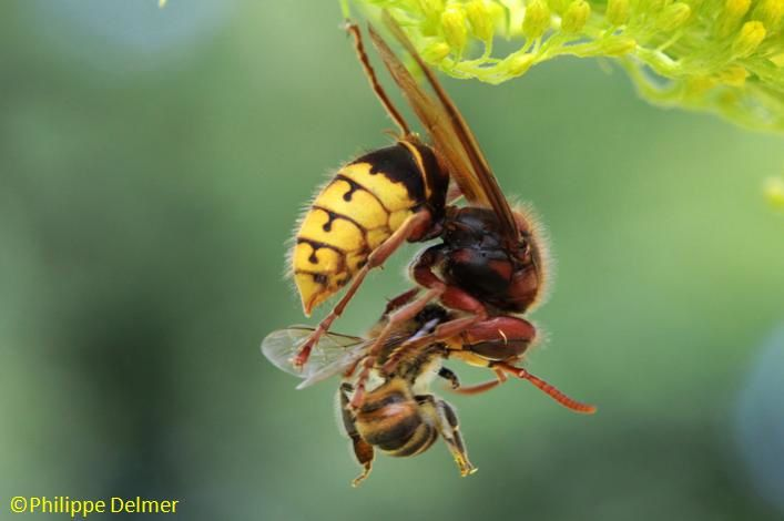 Les insectes domestiques