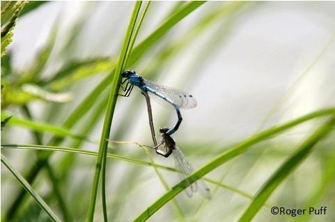Du sexe chez les insectes