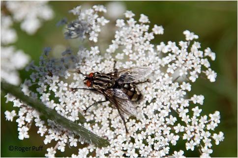 Les insectes des Dix Plaies d'Egypte
