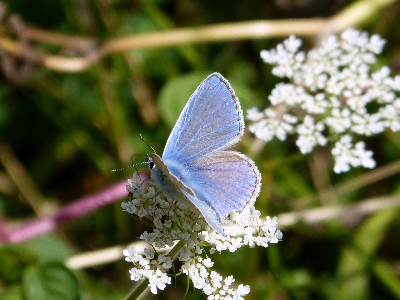 Restons sur les papillons voulez-vous et éteignons la lumière