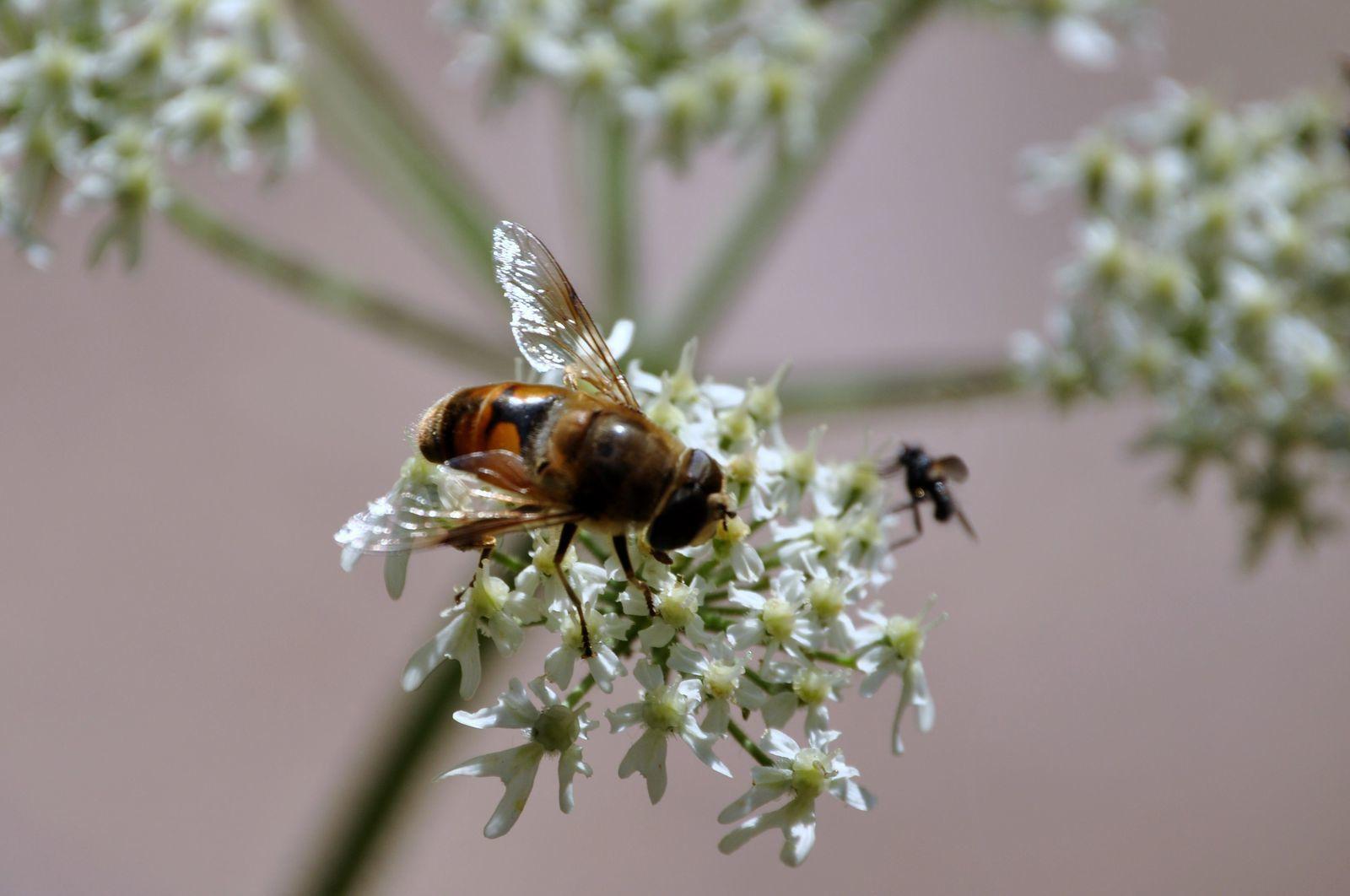 Quelques beaux insectes des Vosges du Nord