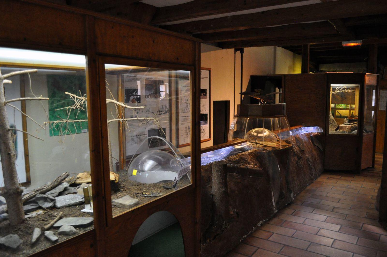 Au Vivarium d'Alsace, insectes et arachnides