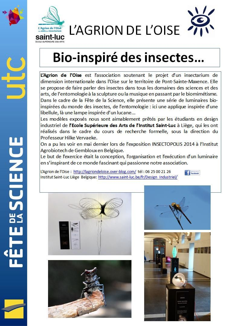 Les insectes illuminent le Village des Sciences à l'UTC