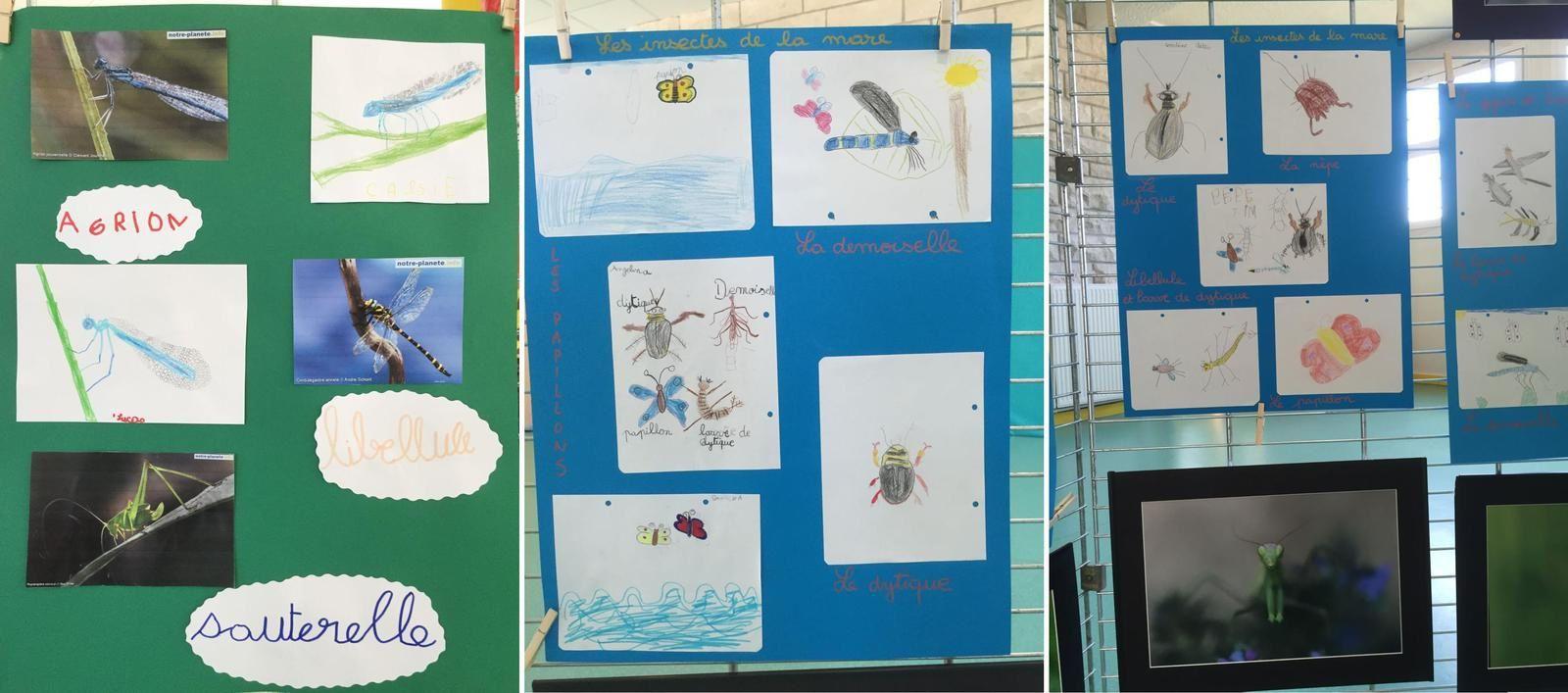 Les insectes à l'école maternelle